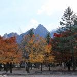 À la découverte des joyaux saisonniers de la Corée du Sud