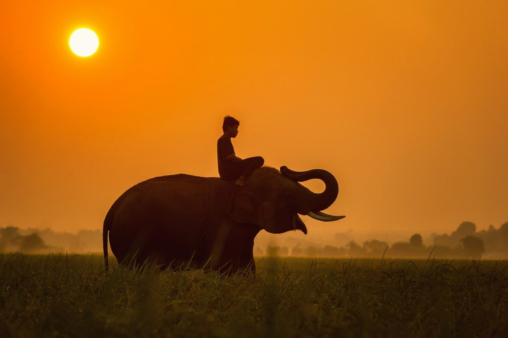 activités autour d'elephant en Thailande